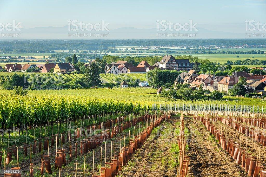 St. Hippolyte with Vineyards stock photo