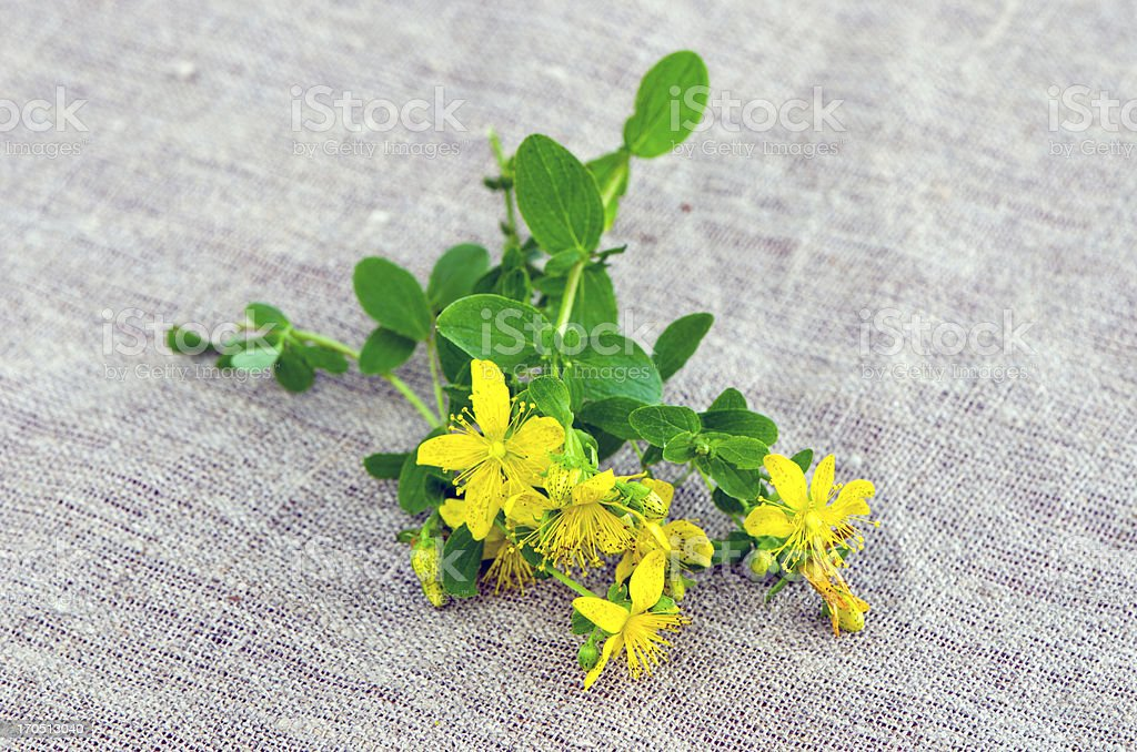 St Johns wort blossoms on linen cloth royalty-free stock photo
