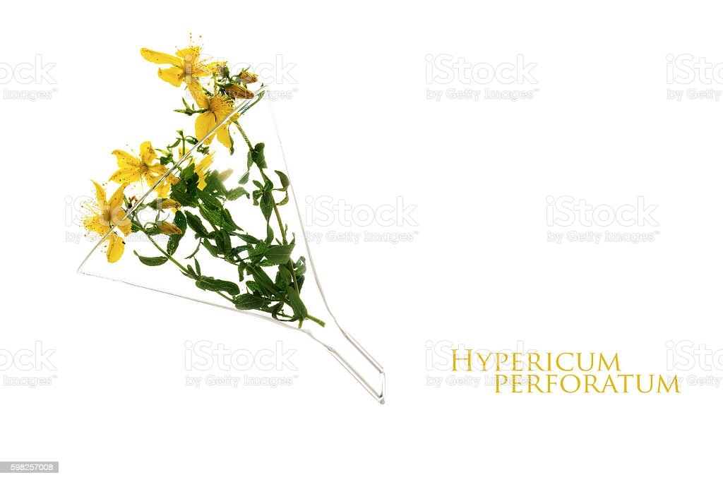 st john's wort (Hypericum perforatum) in a glass funnel isolated stock photo