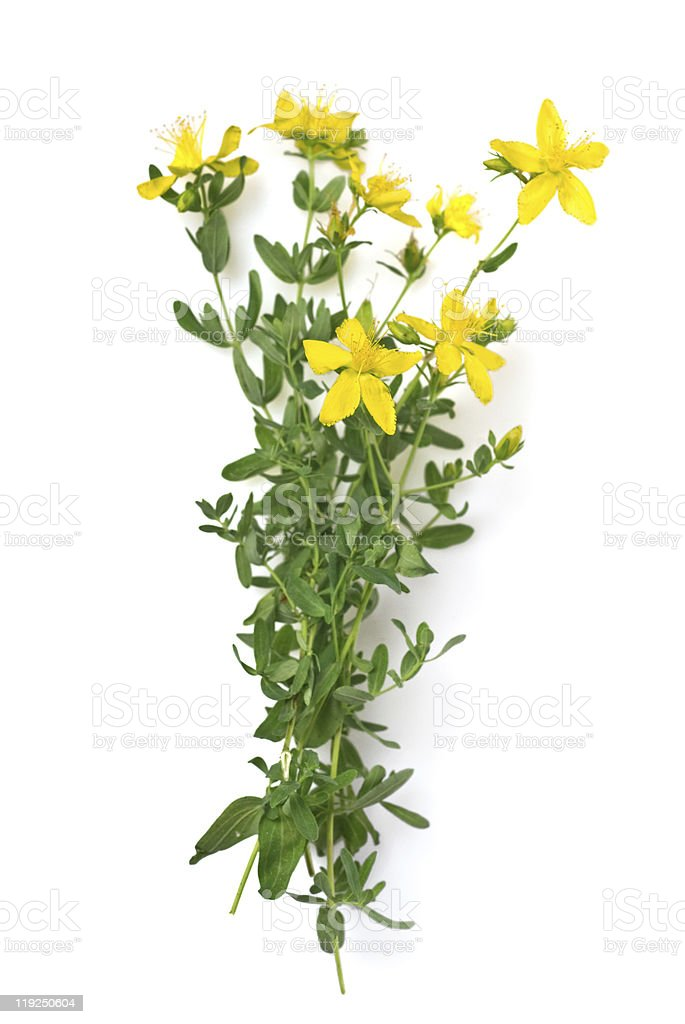 St Johns wort isolated on white royalty-free stock photo