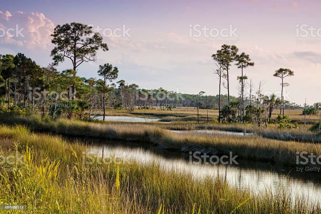 St. Marks National Wildlife Refuge stock photo