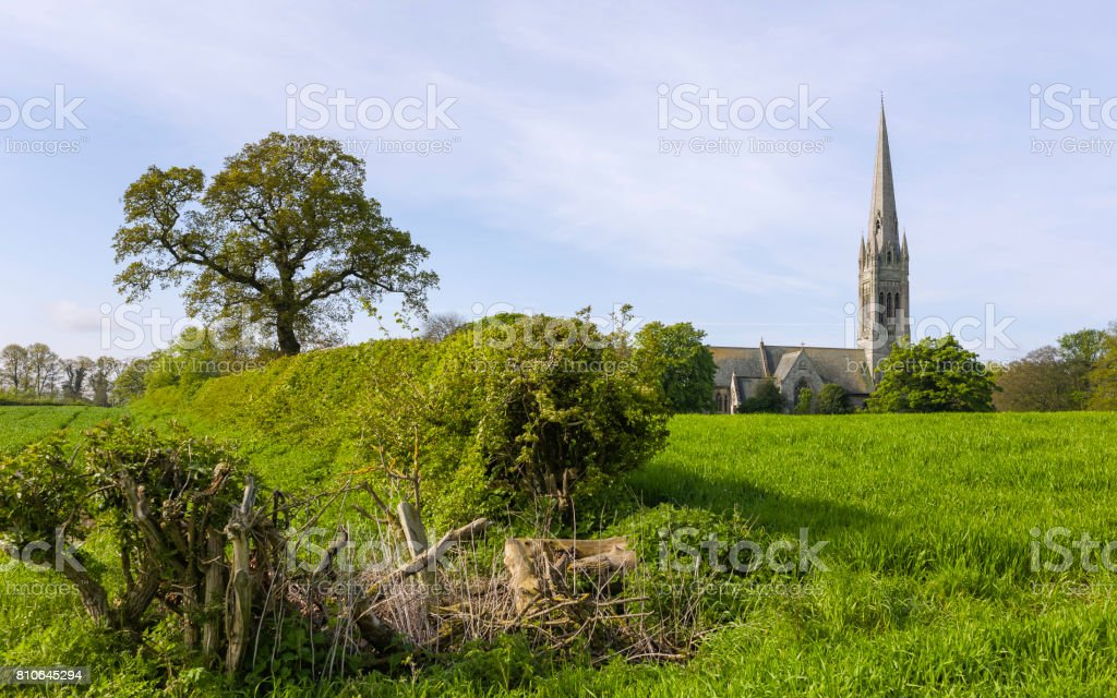 St Marys Church surrounded by wheat field, Yorkshire, UK. stock photo