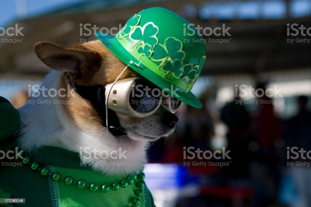 St. Paddy stock photo