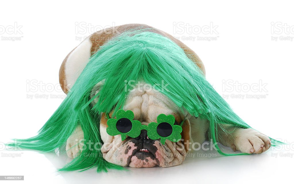 st patricks day dog royalty-free stock photo