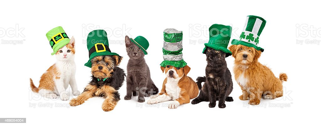 St Patricks Day Puppies and Kittens stock photo