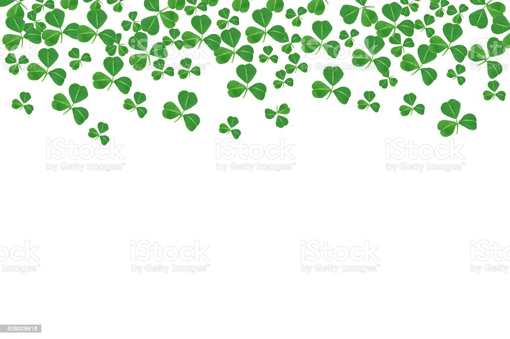 St Patricks Day top border of shamrocks over white stock photo