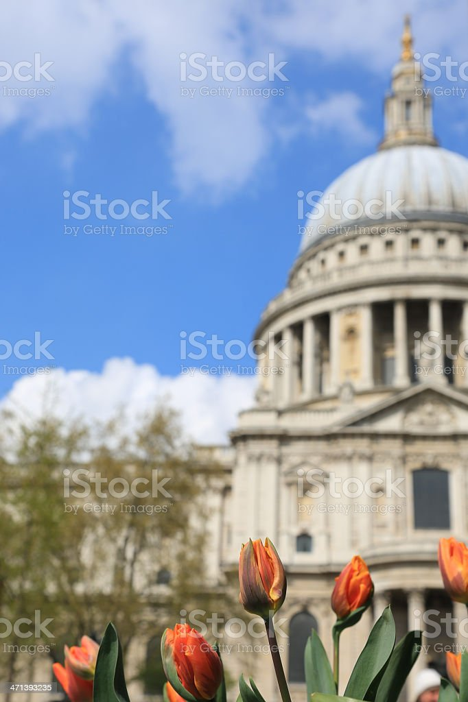 St Paul Cathedral and Flowers, London, United Kingdom stock photo
