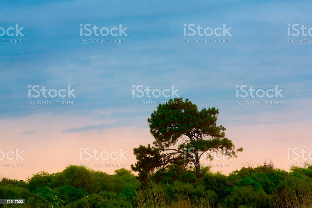 St. Simons Island Beach stock photo