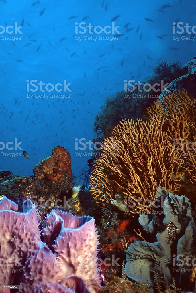St. Vincent Coral Reef royalty-free stock photo