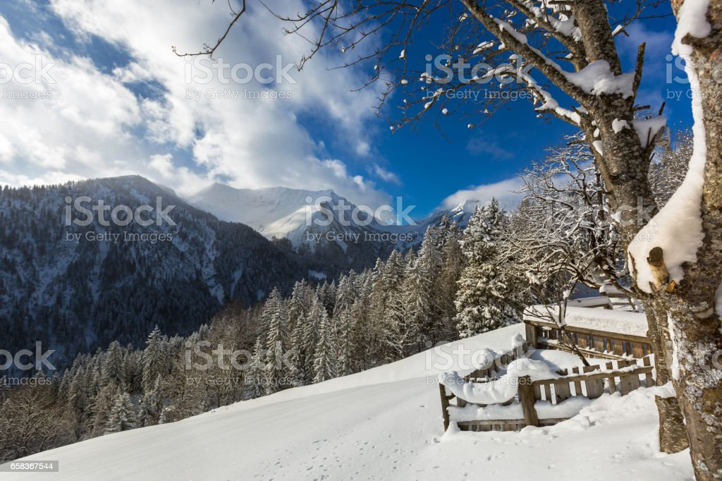 Stable, pine tree covered with now, mountain and blue sky during cold winter stock photo