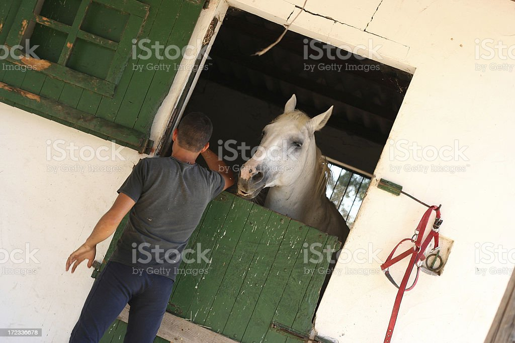 Stableman and his horse stock photo