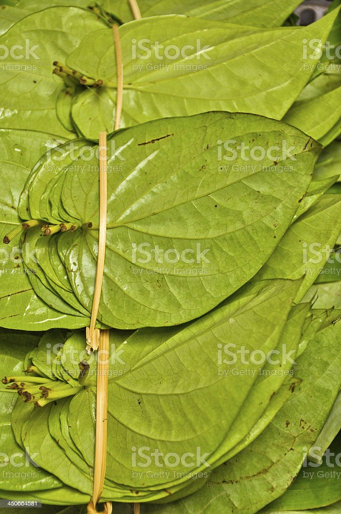 Stack of betel leaf in open market,Thialand stock photo