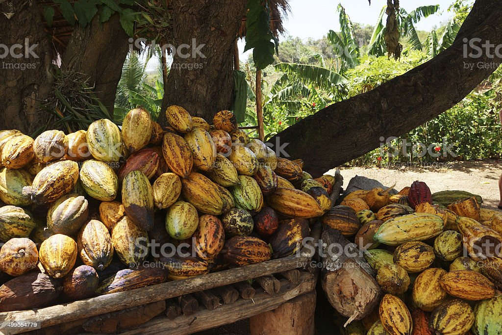 Stack of Cocoa pods from Samana, Dominican republic stock photo