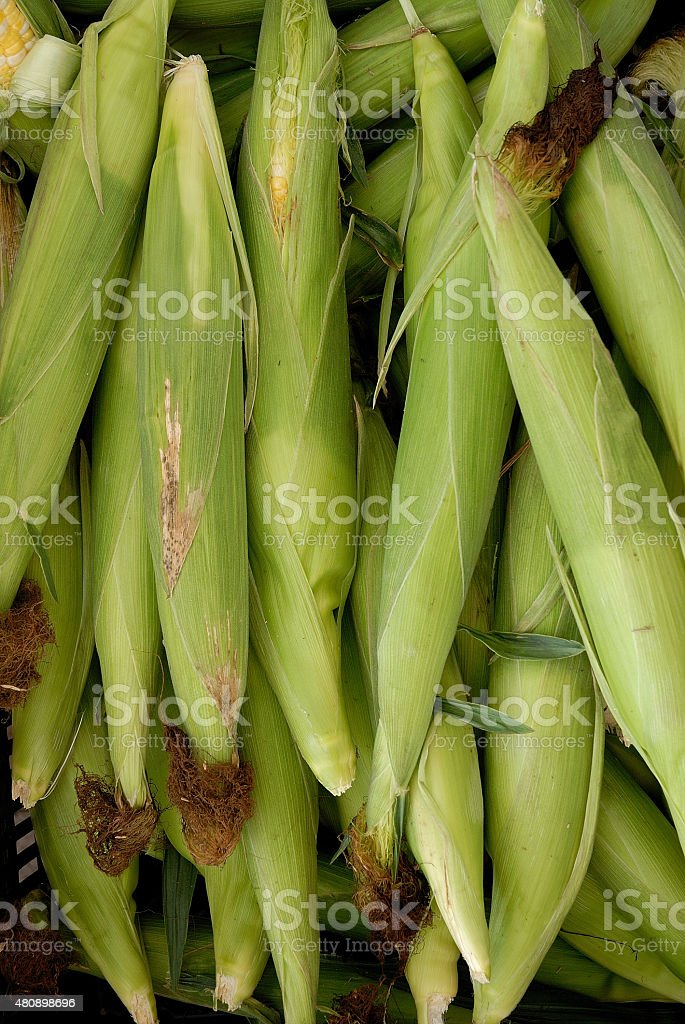 Stack of corn with husks and silks attached stock photo