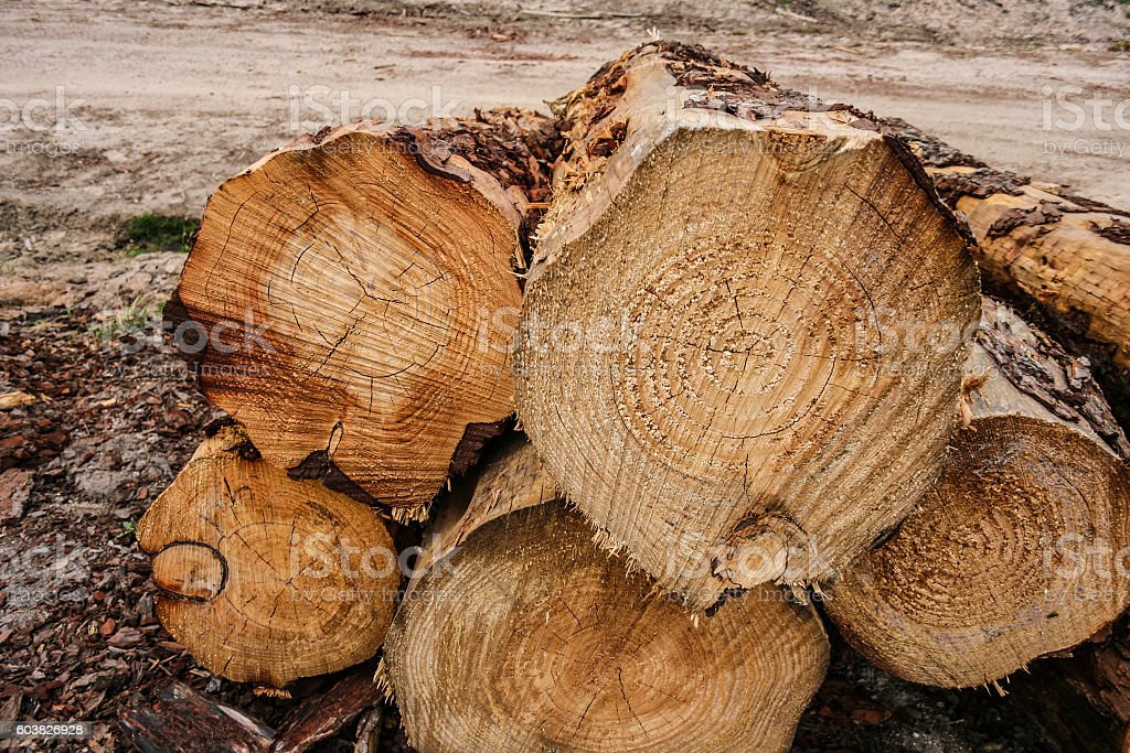 Stack of cut logs in forestry stock photo