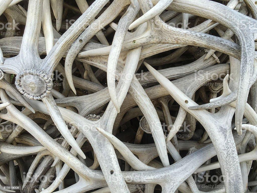 Stack of elk antlers in Jackson stock photo