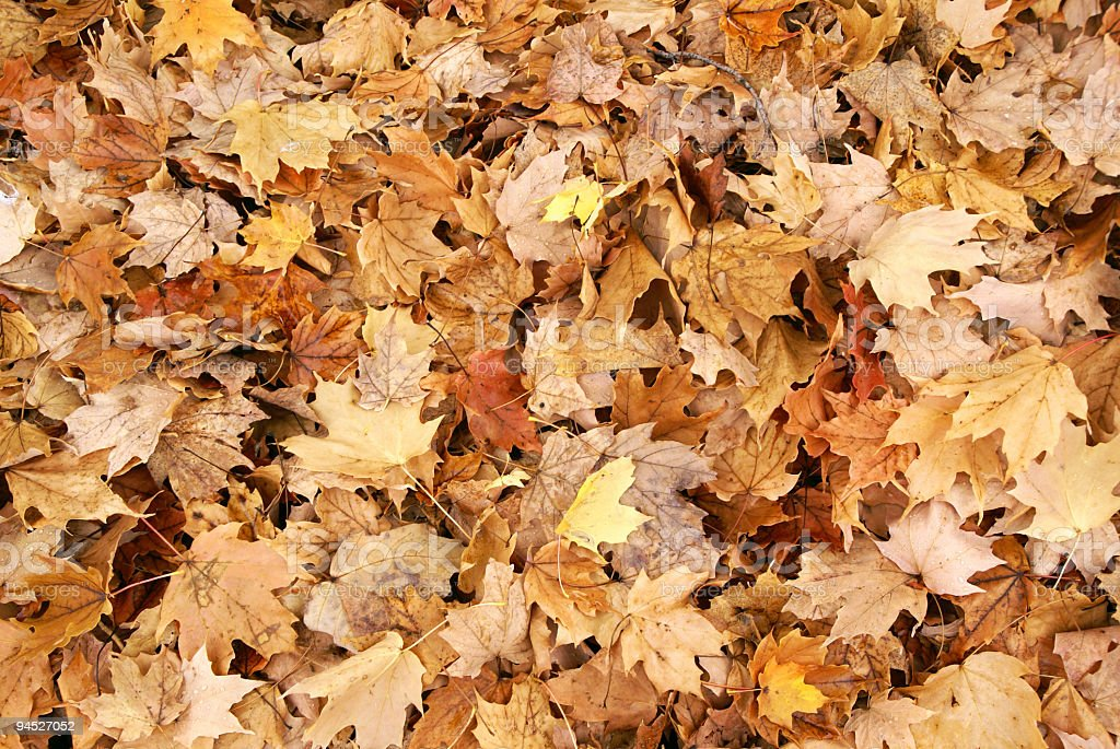 Stack of Fall Leaves stock photo
