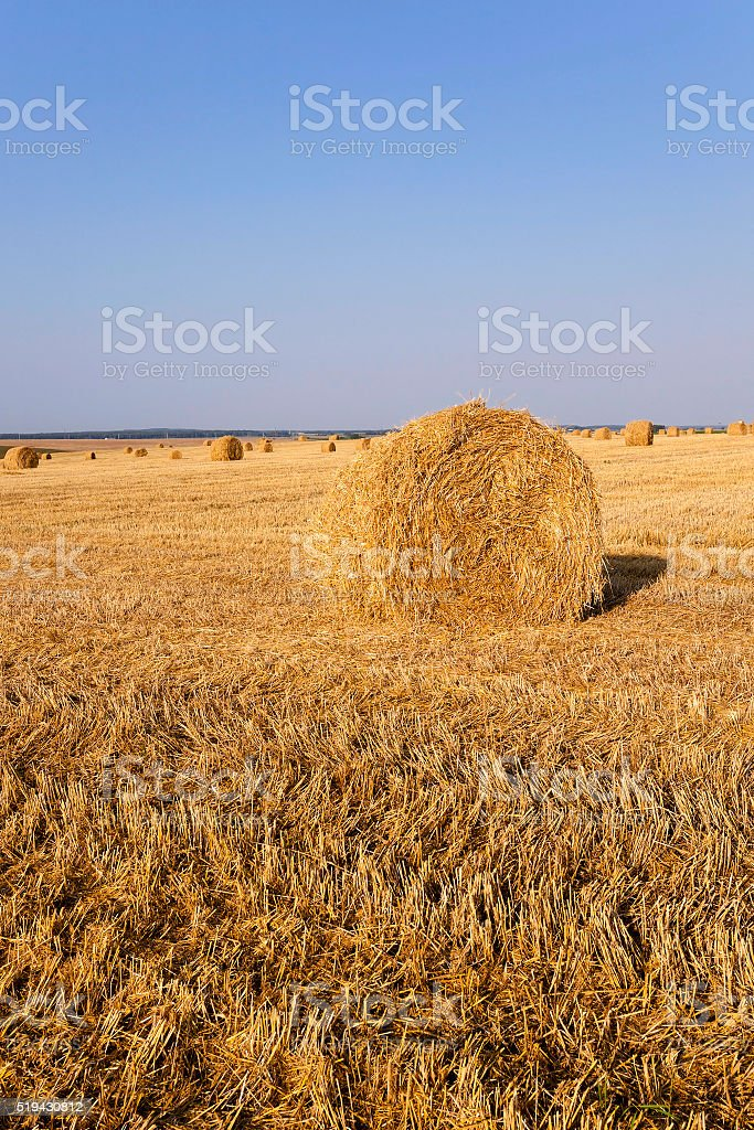 stack of straw in the field stock photo