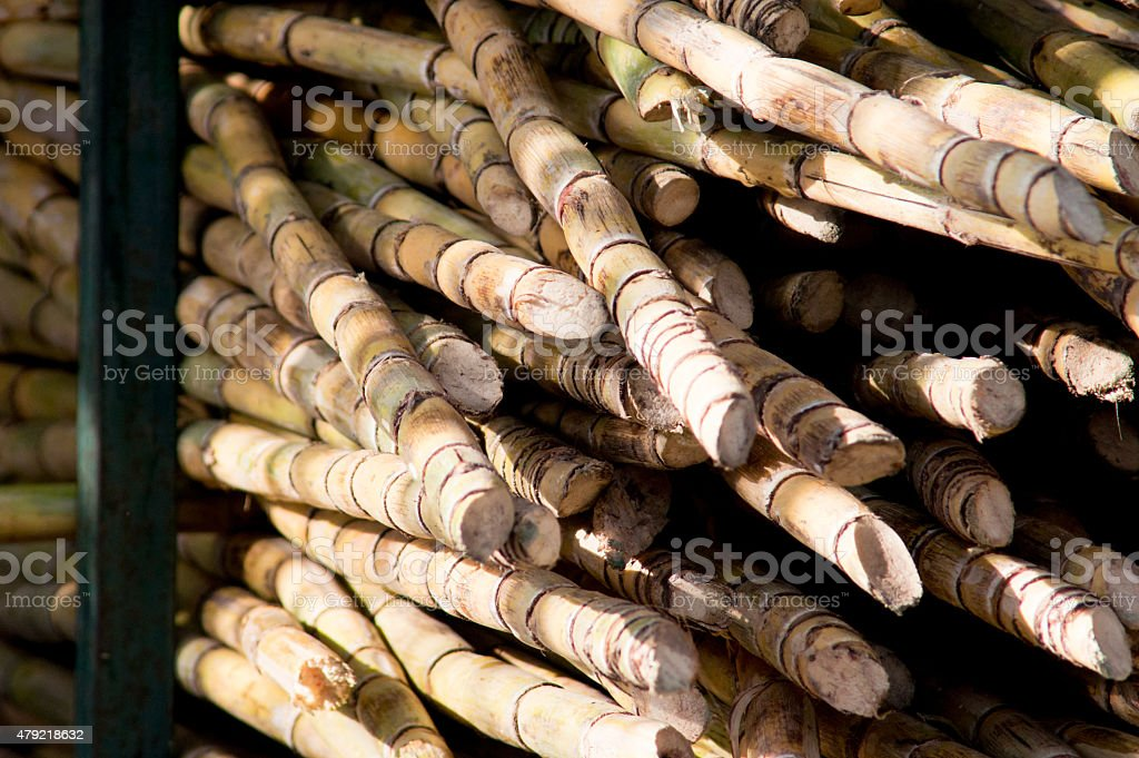 Stack of sugarcane stock photo