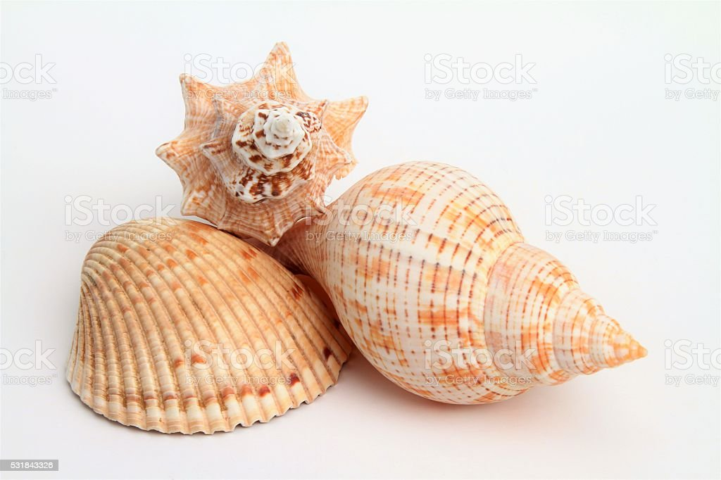 Stack of three differnet seashells stock photo