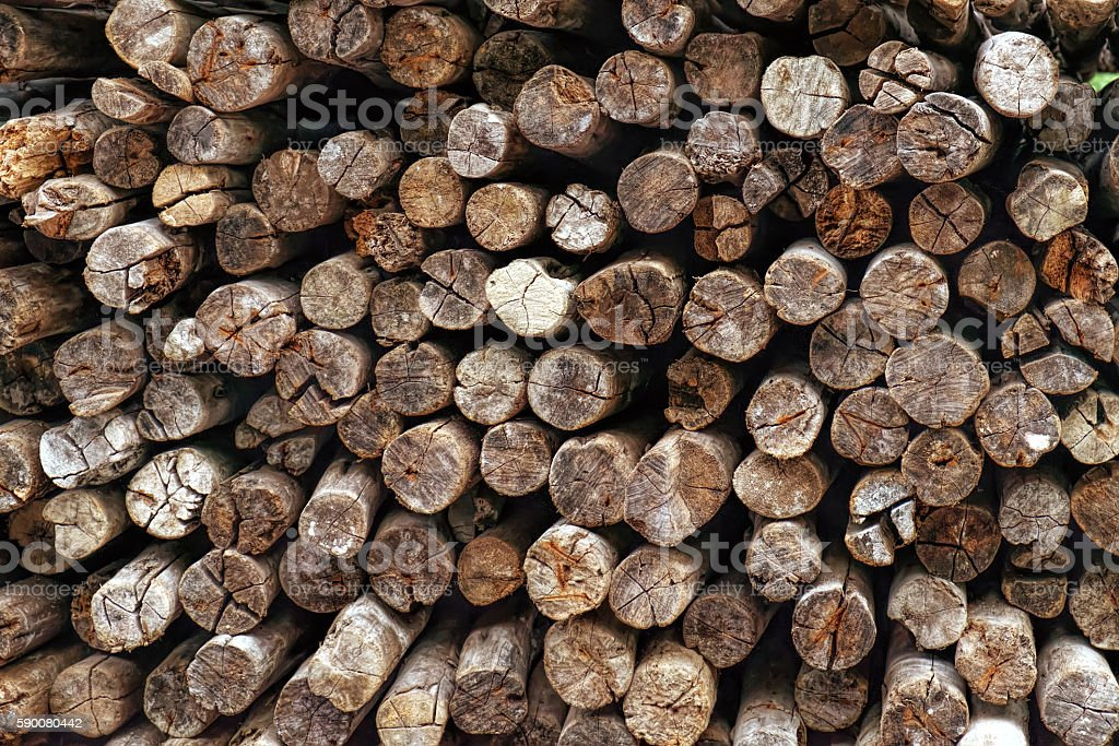 Stack of tropical firewood stock photo
