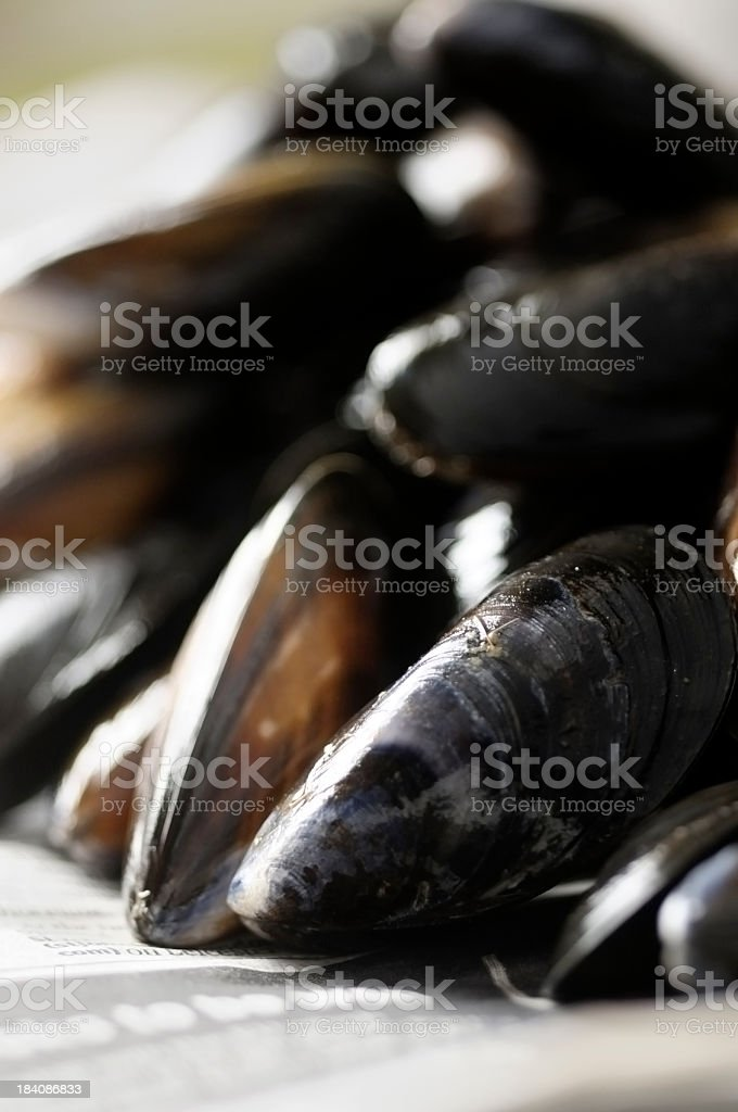 Stack of Uncooked Mussels ( serie ) royalty-free stock photo