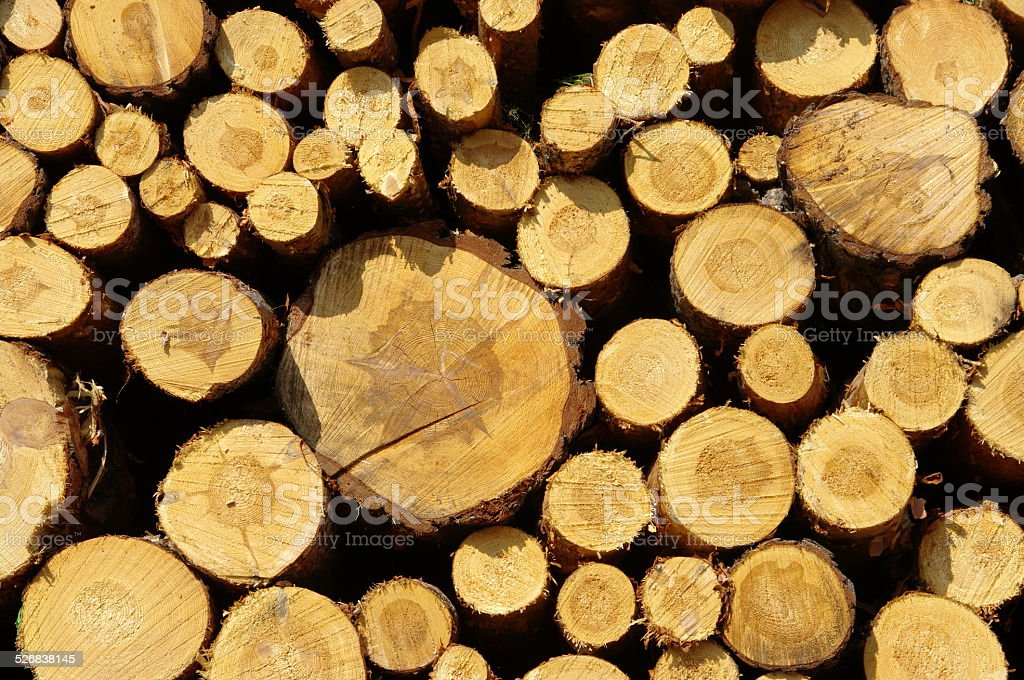 stack of wood stock photo