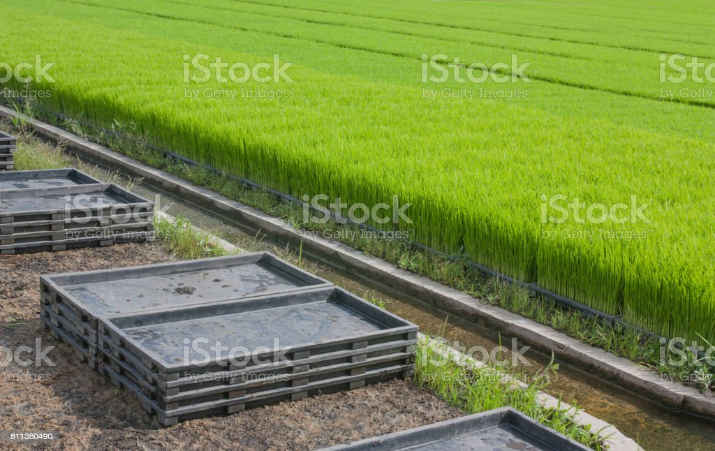 Stack trays of seedlings and plantation of crops. stock photo