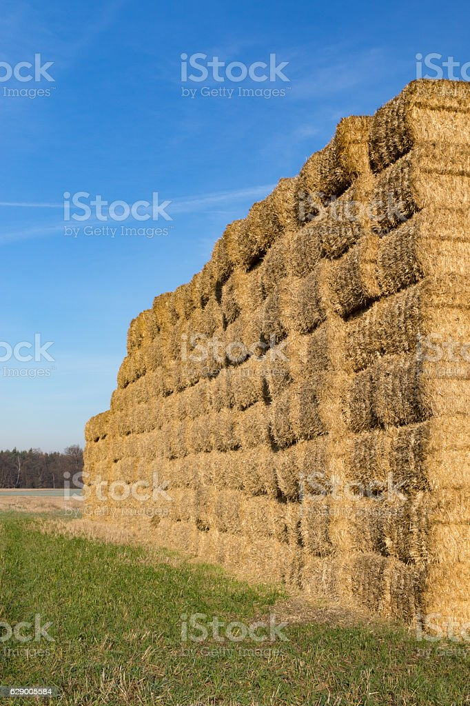 Stacked bales of straw stock photo