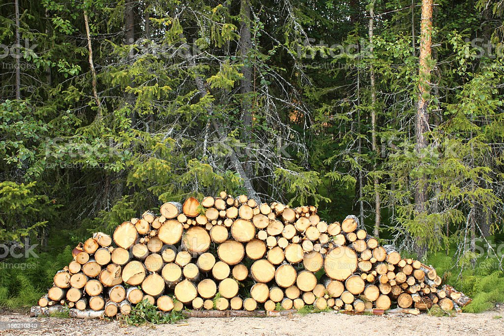 Stacked Birch Logs royalty-free stock photo