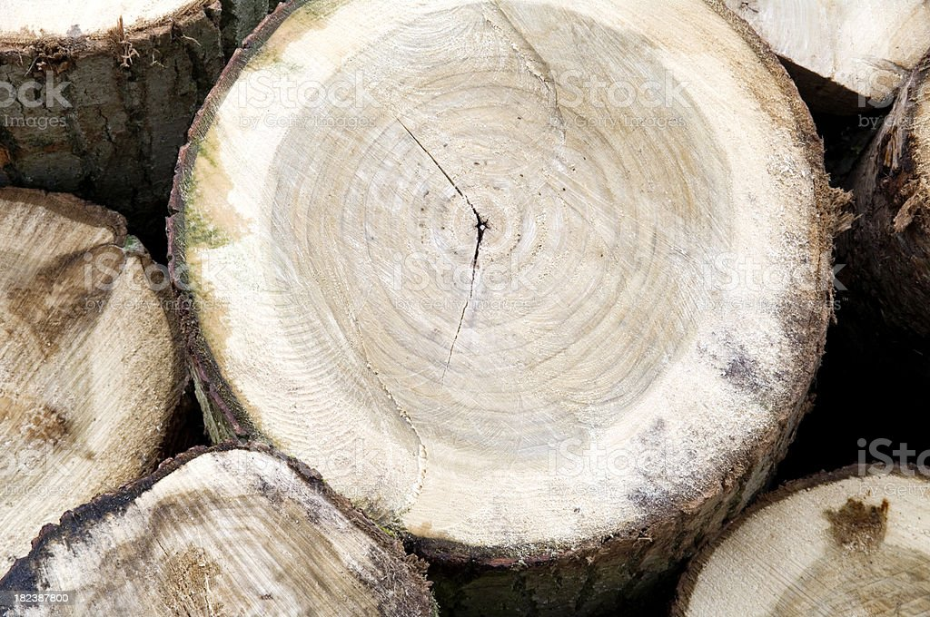 Stacked Birchwood Logs royalty-free stock photo