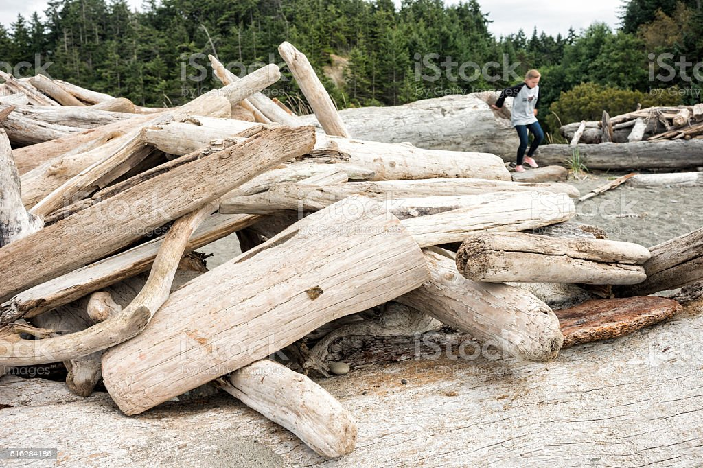 Stacked driftwood logs on Dungeness Spit stock photo
