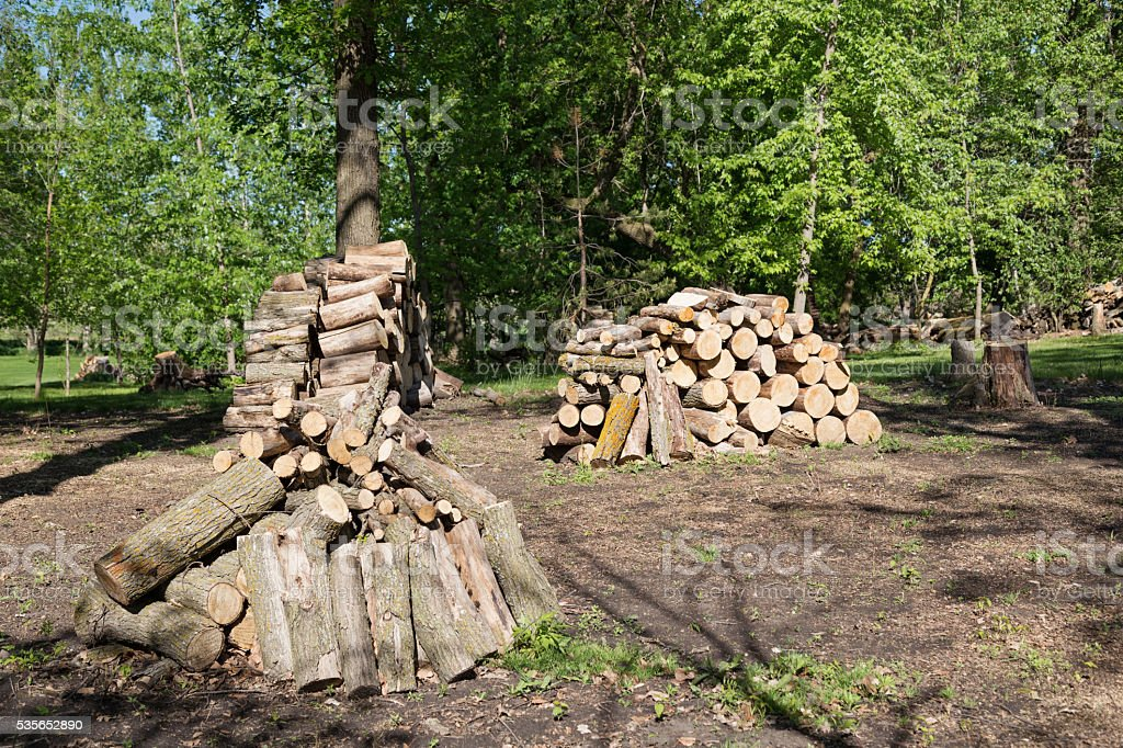 Stacked Firewood in the Woods stock photo