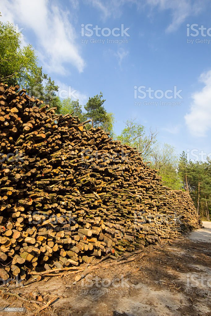 stacked forest stock photo
