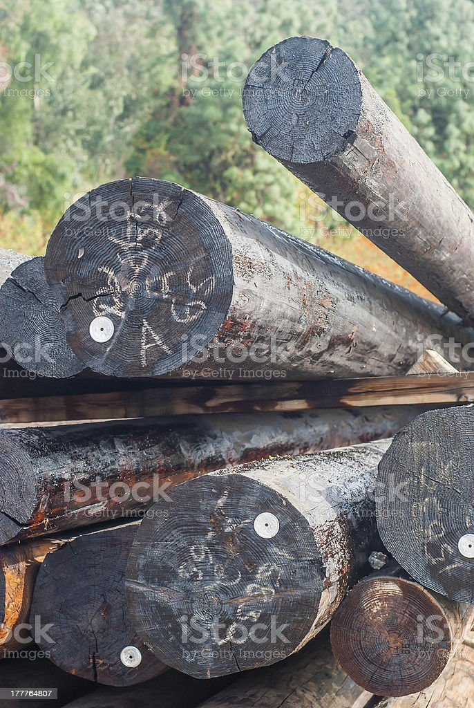 Stacked Logging Wood royalty-free stock photo
