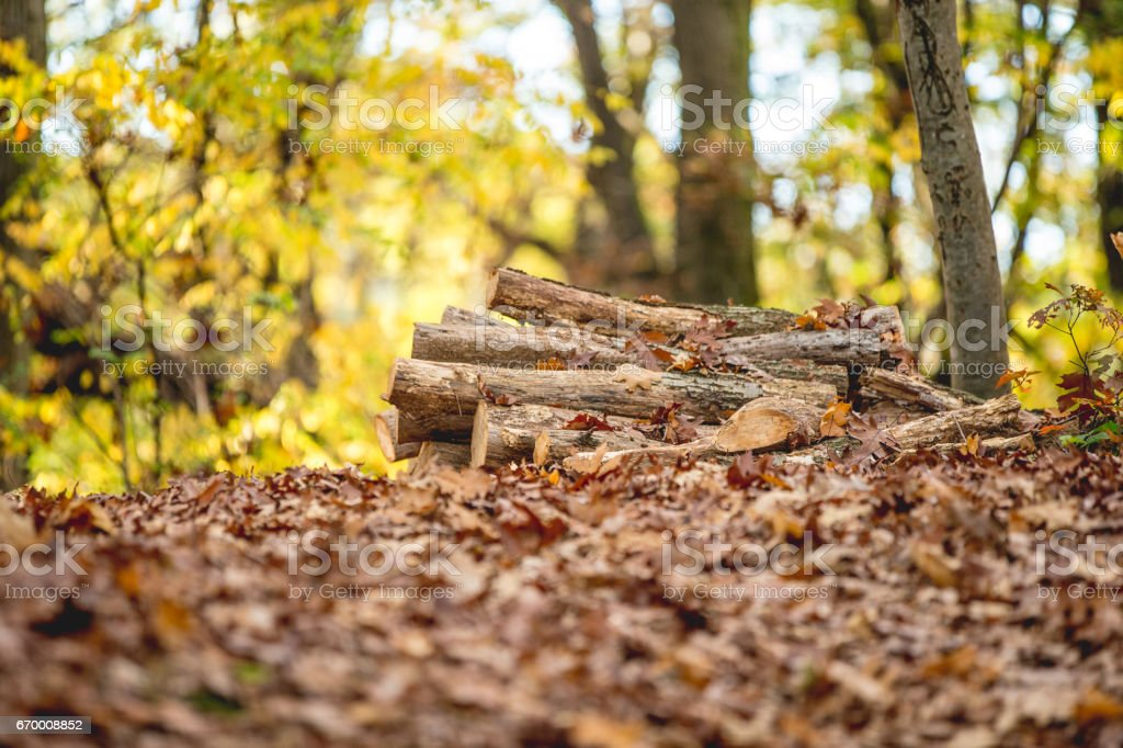 Stacked Logs In Autumn Forest stock photo