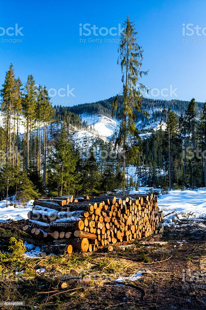 Stacked Logs in forest, Tatra Mountains stock photo