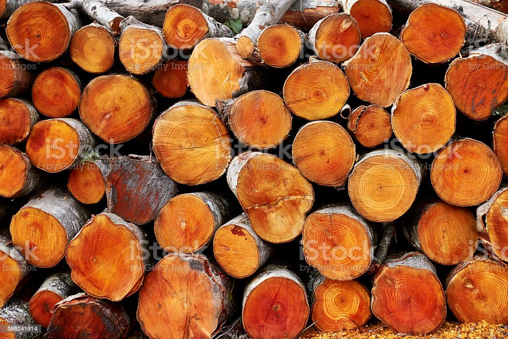 Stacked logs of alder trees stock photo