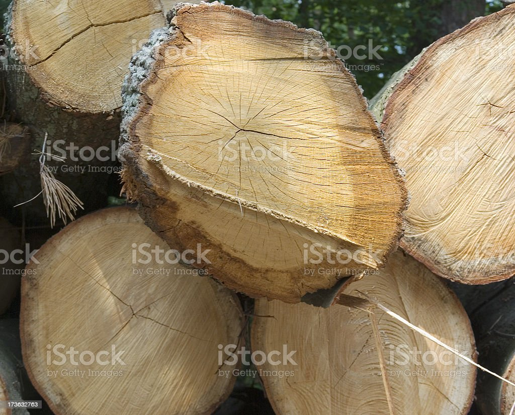 Stacked Logs royalty-free stock photo