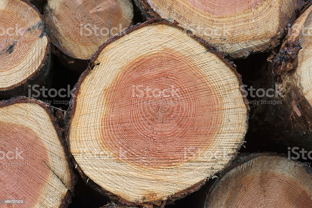 stacked logs stock photo