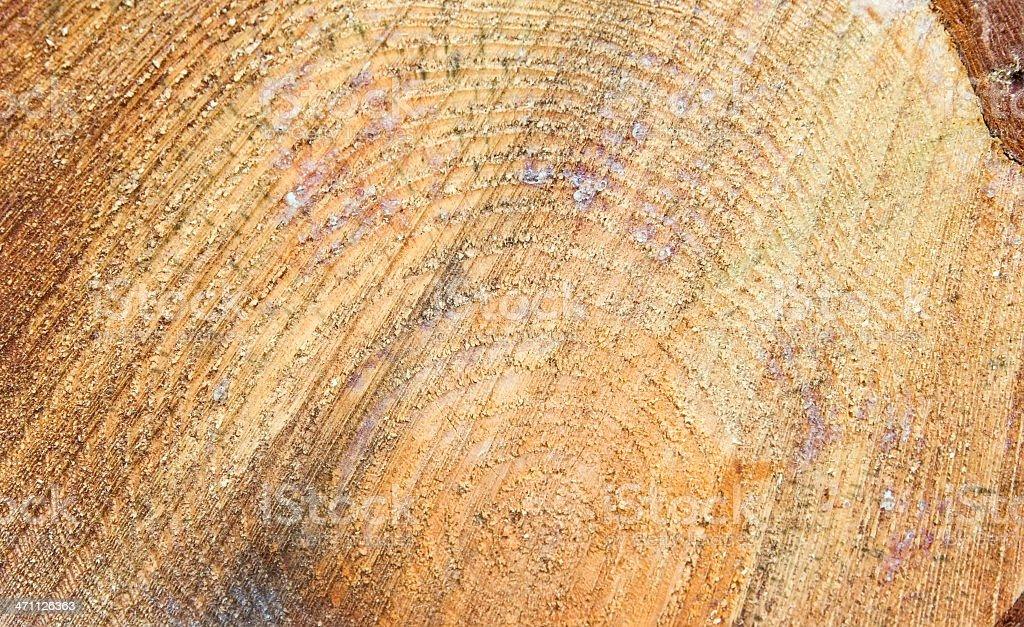 Stacked Pinewood Logs (Pinus sylvestris) royalty-free stock photo