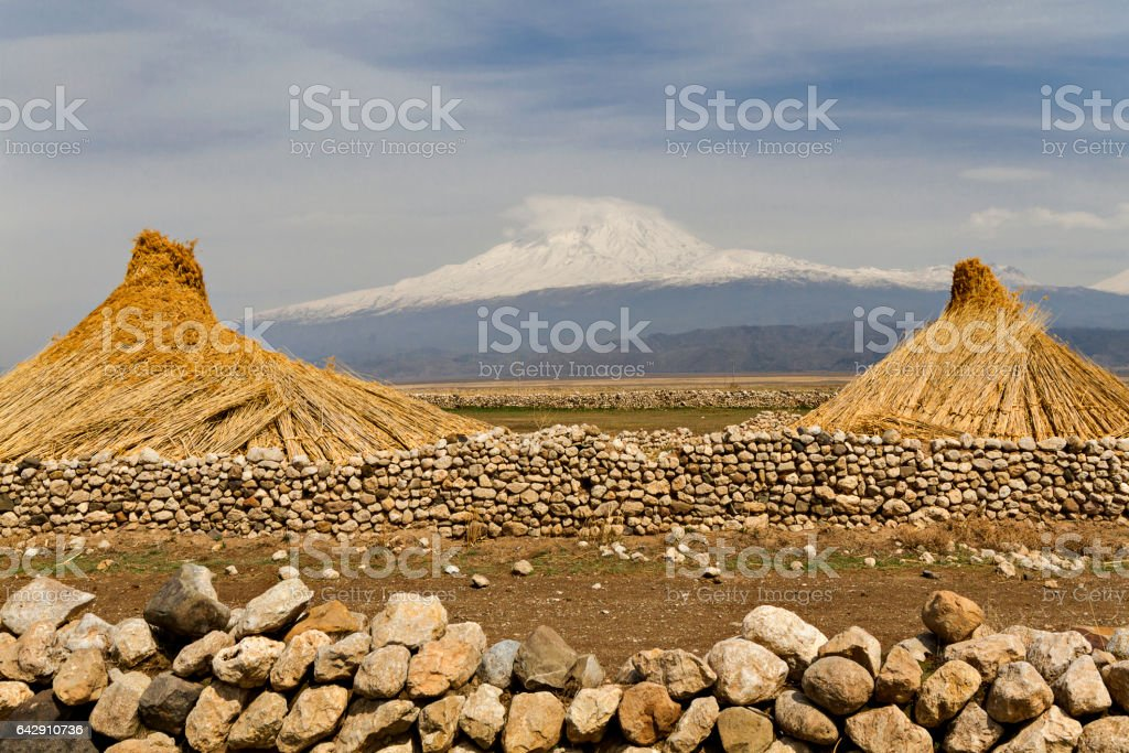 Stacked reeds and Mount Ararat in Eastern Turkey stock photo
