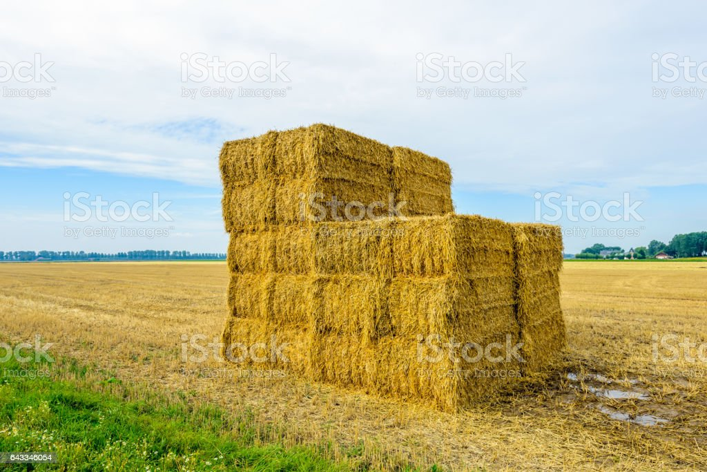 Stacked straw bales in front of a large stubble field stock photo