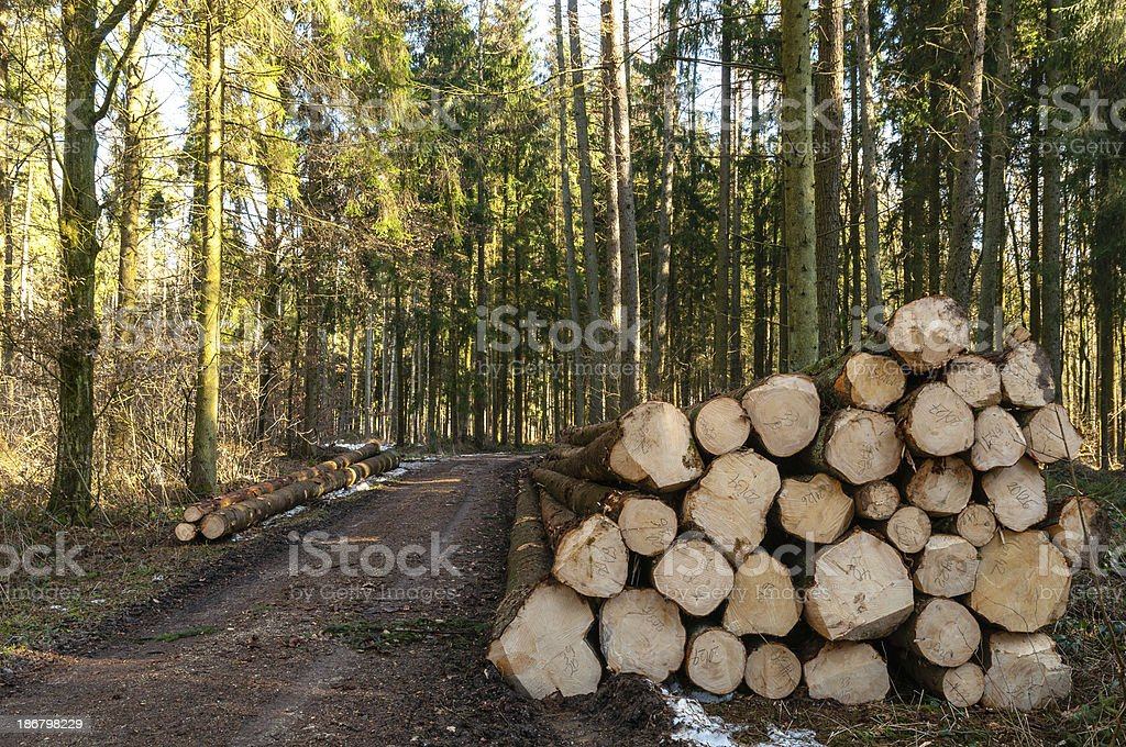 Stacked tree trunks by the wayside in forest royalty-free stock photo