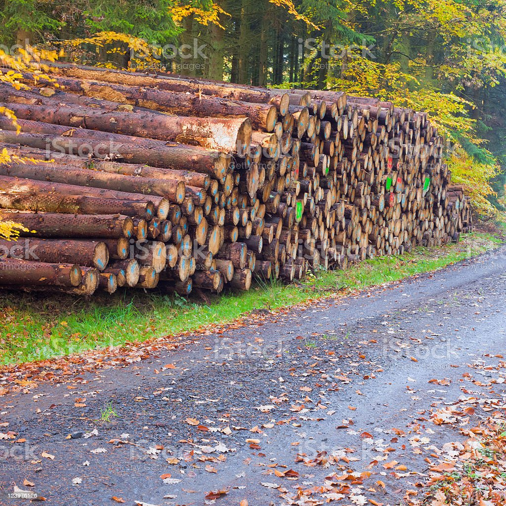 Stacked tree trunks in fall-colored forest. royalty-free stock photo