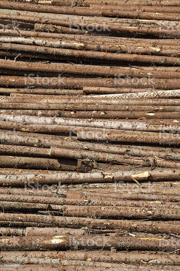 Stacked tree trunks royalty-free stock photo