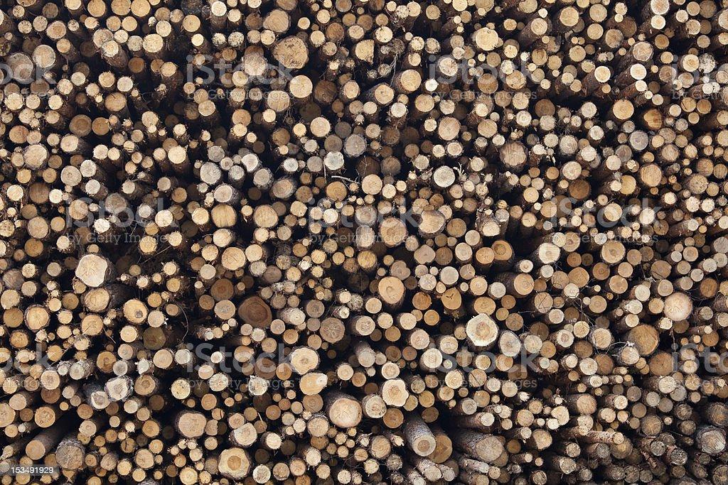 Stacked tree trunks royalty-free stock photo