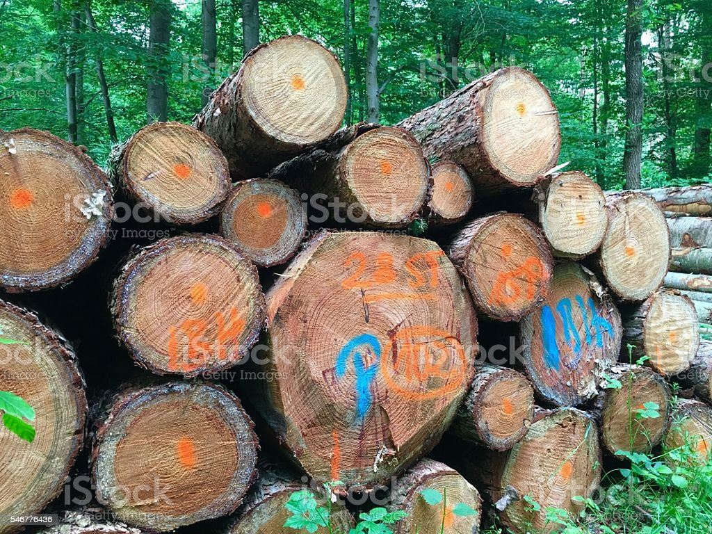 Stacked tree trunks stock photo
