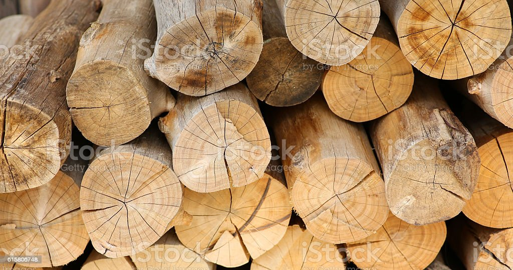 Stacked tree wood logs background stock photo