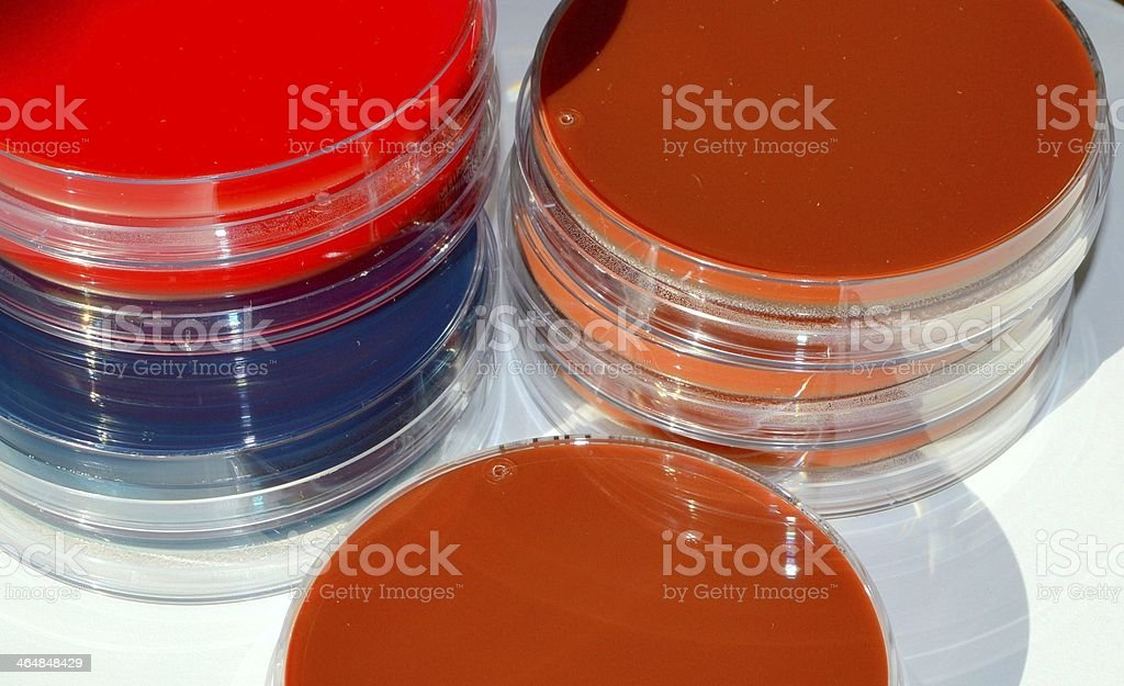 Stacks of agarplates. royalty-free stock photo